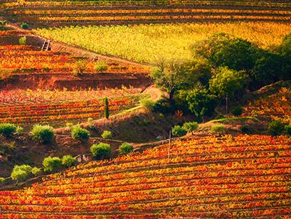 Herfstwandeling in de Douro-vallei
