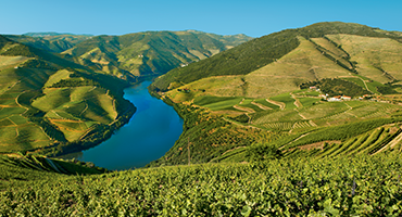 Discovery: the grape harvest in the Douro valley