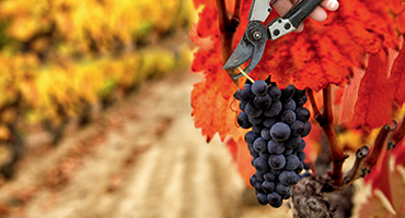 The grape harvest: total immersion in the heart of the Douro Valley